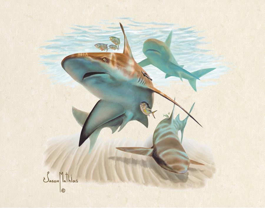 sandbar-shark.jpg